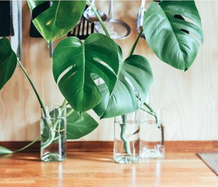 Why SERVPRO Cleaner Air with Houseplants?